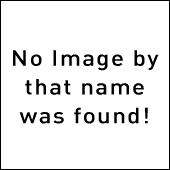 Аллигатор на пешеходном переходе